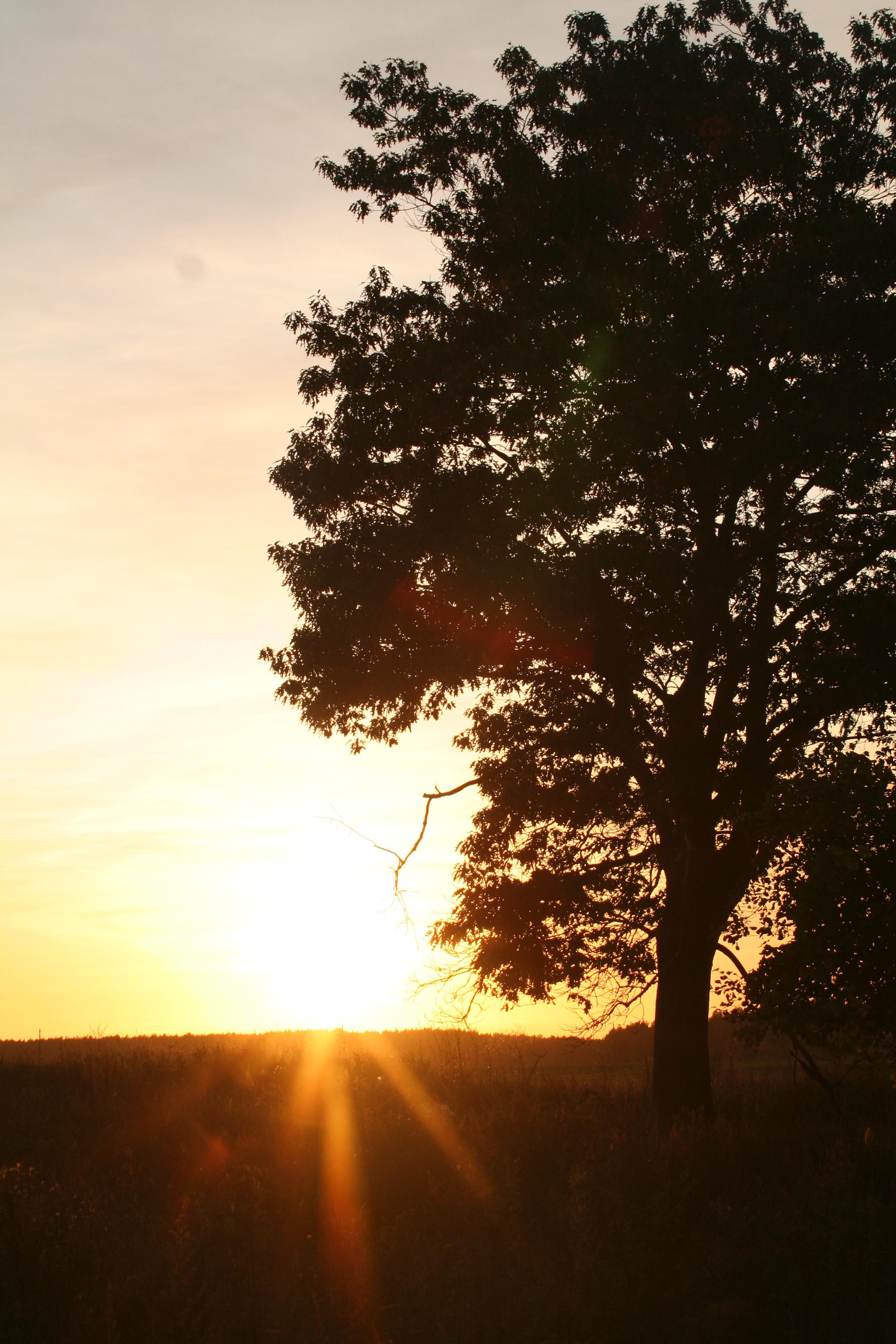 Sonnenuntergang mit Baum