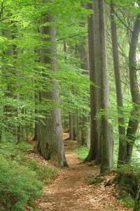 Flusswanderung am Regen im Bayerischenwald