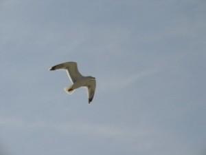 Wie ein Vogel durch den Himmel