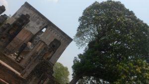 Bäume Buddah und Tempel