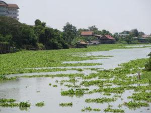 Fluss mit grünen Pflanzen mitten in Ayutthaya