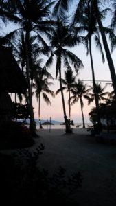 Schwarze Palmen vor rot gefärbten Himmel