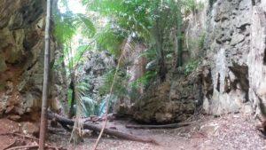 Der Weg zum Aussichtspunkt führt durch Dschungelartige Landschaft